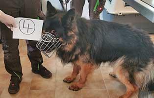 hund-04-altd-schäferhündin-rex Wieder eine Rettung aus quälerischer Haltung – helfen Sie 14 Hunden in höchster Not