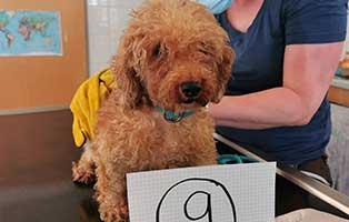 hund-09-pudelmix-bonny Wieder eine Rettung aus quälerischer Haltung – helfen Sie 14 Hunden in höchster Not