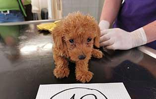 hund-10-pudelmix-twinky Wieder eine Rettung aus quälerischer Haltung – helfen Sie 14 Hunden in höchster Not
