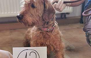 hund-12-terriermix-schnuppe Wieder eine Rettung aus quälerischer Haltung – helfen Sie 14 Hunden in höchster Not