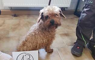 hund-13-pudel-mix-daniel Wieder eine Rettung aus quälerischer Haltung – helfen Sie 14 Hunden in höchster Not