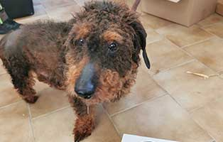 hund-14-dackelmix-karl-heinz Wieder eine Rettung aus quälerischer Haltung – helfen Sie 14 Hunden in höchster Not