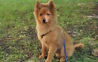 hund-carlo-zuhause-gefunden-wiese Hund Rex hat eine neue Freundin