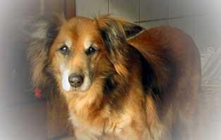 hund-spike-verstorben-portrait Teddy