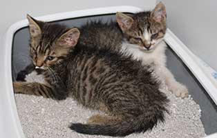 katzenschwemme-bekescsaba-katzenbabys Die Katzen von Békéscsaba