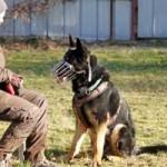 patentier-schaeferhund-rocky-01-150x150 Rocky - Deutscher Schäferhund (SH210/20)