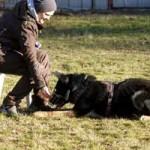patentier-schaeferhund-rocky-02-150x150 Rocky - Deutscher Schäferhund (SH210/20)