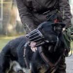 patentier-schaeferhund-rocky-04-150x150 Rocky - Deutscher Schäferhund (SH210/20)