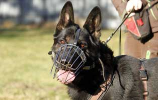 patentier-schaeferhund-rocky-05 Paul - Shetlandpony (TP019/15)