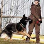 patentier-schaeferhund-rocky-06-150x150 Rocky - Deutscher Schäferhund (SH210/20)