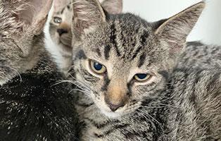 Jungkatze02-bk-162-21-weiblich-start-ins-leben Drei Jungkatzen aus dem Tierheim Bückeburg suchen Start-ins-Leben Paten