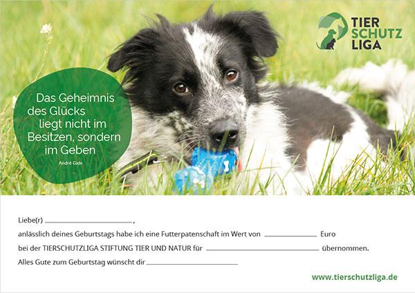 futterpatenschaft-zum-geburtstag-hund-klein Spenden und Schenken: Verschenken Sie Hoffnung für ein Tier