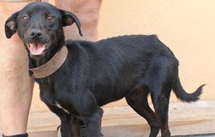 hund-bundi-weiblich-aufnahmepaten Vier Hunde aus Békéscsaba suchen Aufnahmepaten
