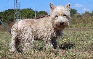 hund-sziren-weiblich-aufnahmepaten Vier Hunde aus einem polnischen Tierheim suchen Aufnahmepaten