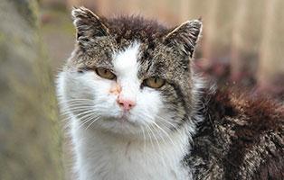 kater-moses-patentier02 Tierpate werden