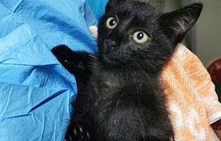 katzenbaby-weiblich-bissverletzung-hilfe Die wilde 13 in Bückeburg