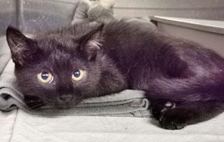 katzenbaby-weiblich-quarki-schaut Katzenbaby mit schwerer Verletzung braucht Hilfe