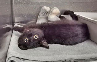 katzenbaby-weiblich-quarki Katzenbaby mit schwerer Verletzung braucht Hilfe