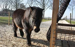 pony-paula-patentier03 3-monatige Futter-Patenschaft Teil2