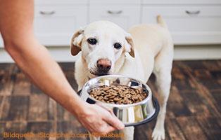 ratgeber-hunde-futterqualität Gutes und hochwertiges Hundefutter
