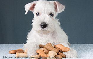 ratgeber-hunde-leckerli Ein Tierheimhund zieht ein