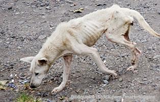 winterfutterhilfe-ungarn-hund-hunger Ein LKW voll Futter für frierende ungarische Straßentiere