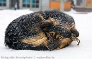 winterfutterhilfe-ungarn-hund-schnee Ein LKW voll Futter für frierende ungarische Straßentiere