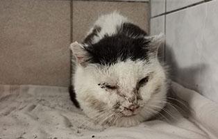 zwei-werwahrloste-kranke-katzen Scheidungsopfer Lilly, hat Diabetes - Hund in Not