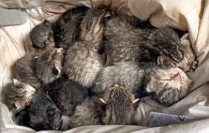 acht-kitteni-dachboden-300x191 Schrecklicher Dachboden-Fund