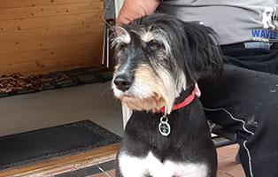 hund-baerbel-zuhause-gefunden-gesicht Glücklich vermittelt - Adoption geglückt