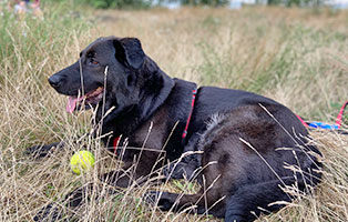 hund-gracja-zuhause-gefunden-ball Startseite