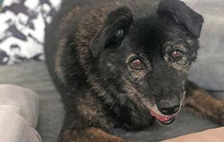 hund-klausi-zuhause-gefunden01 Glücklich vermittelt - Adoption geglückt