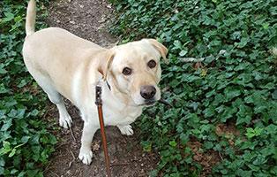 hund-murmel-zuhause-gefunden-schaut Glücklich vermittelt - Adoption geglückt