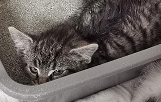 katzenbaby-sk47121-weiblich Vier Katzenbabys aus dem Tierschutzliga-Dorf suchen Start-ins-Leben Paten