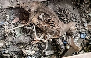 skelett-dachboden-300x191 Schrecklicher Dachboden-Fund