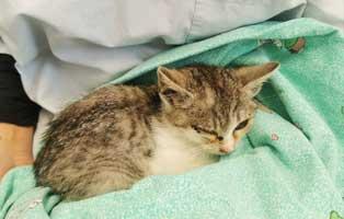 einsame-babykatze-verwahrlost Ein Kleintierhaus für das Tierheim Bückeburg