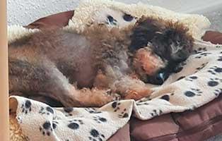hund-locke-zuhause-gefunden-schlaeft Vermittlungstier