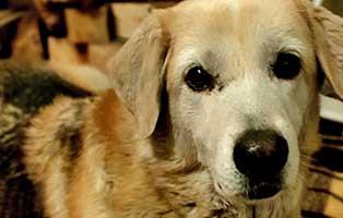 hund-sly-zuhause-gefuden-portrait Sita, ehemals Pepper, ist eine Sonne für alle