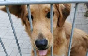 hund02-weiblich-8-monate-aufnahmepaten-300x191 Vier Hunde aus einem polnischen Tierheim suchen Aufnahmepaten