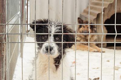 iStock-158238346-zLaci-wärme-klein Wärme für Tiere in Not – Ihre Wärmespende verändert Lebensqualität